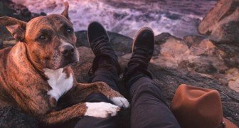 La maravillosa mision espiritual de los perros en nuestra vida