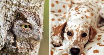 24 Immagini di animali mimetizzati che difficilmente riuscirete a notare