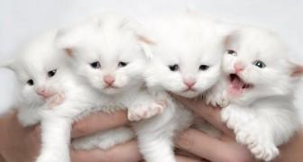 Dieser Fotograf portraitiert die majestätische Schönheit der Maine Coon Katzen: Danach werden auch Sie eine haben wollen