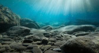 I pesci d'acqua salata potrebbero estinguersi già nel 2048: lo afferma un gruppo di esperti