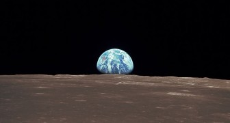 Een Chinese ruimtesonde die geland is op de schaduwzijde van de maan heeft planten en dieren meegenomen