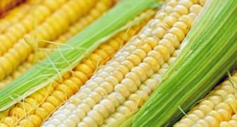 Verrassend genoeg blijkt uit een overzicht van 6.000 onderzoeken dat het gebruik van genetisch gemodificeerd voedsel gezondheidsvoordelen oplevert
