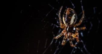 Wenn die Spinnen sich verbünden würden, könnten sie die ganze Menschheit in weniger als einem Jahr auffressen
