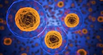 Forscher konnten Brustkrebszellen in Fett verwandeln und Metastasen blockieren