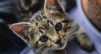 Se pensi che i gatti siano asociali, è probabile che sia tu ad essere una brutta persona: lo dice la scienza