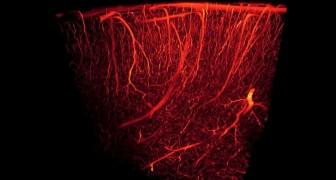 Un tout nouveau type de vaisseau sanguin a été découvert : il était caché dans les os humains