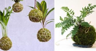 Kokedama, die japanische Gartentechnik, die leicht zu kopieren ist