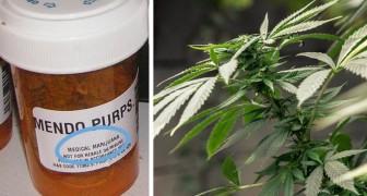 Svolta sulla cannabis: finalmente l'OMS riconosce le sue proprietà terapeutiche