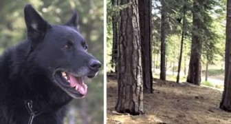 A dog saves its owner's life by keeping him warm for three days and protecting him from coyotes