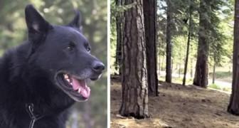 Um cachorro salva a vida de um humano deixando ele quente por três dias e protegendo-o dos coiotes