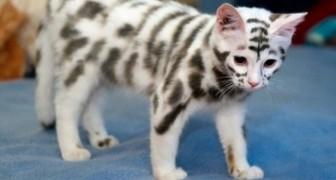 21 oemotståndliga katter som är både roliga och speciella