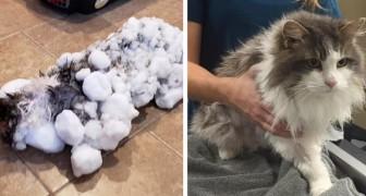 Trovano un gatto totalmente congelato in mezzo alla bufera: le cure dei veterinari fanno un vero miracolo