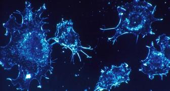 Hoe werkt het nieuwe medicijn paard van Troje, dat kankercellen van binnenuit doodt