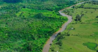 Brasile: in arrivo tre progetti infrastrutturali che minacciano drammaticamente la foresta amazzonica