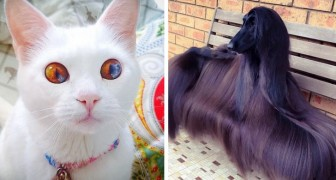 18 animali così geneticamente incredibili da sembrare irreali