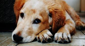 Prendere un cane è il regalo più bello che possiamo fare a noi stessi e alla nostra famiglia