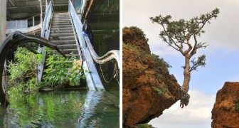 De wraak van de natuur: 16 foto's die ons zijn niet te stoppen vasthoudendheid laten zien