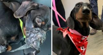 Um cachorro é amarrado e jogado em uma fossa, mas o culpado comete um erro que lhe custará caro