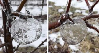 Das seltsame Geheimnis der Geisteräpfel, die im Winter an den Bäumen auftauchten: Was ist die Erklärung?