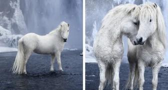 Een fotograaf maakt prachtige beelden van paarden temidden van het epische landschap van IJsland
