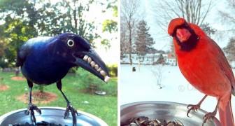 Installa una fotocamera in giardino e scopre che è affollato di uccelli di cui non conosceva nemmeno l'esistenza