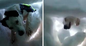 Un uomo intrappolato sotto la neve filma il momento in cui viene soccorso da un cane da salvataggio