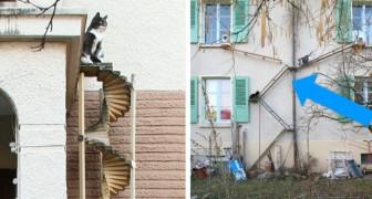 In der Schweiz installieren Wohnhäuser Außentreppen für Katzen... und das ist eine geniale Idee...