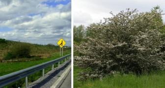Il curioso episodio dell'autostrada irlandese che è stata deviata per salvare un cespuglio sacro alle fate