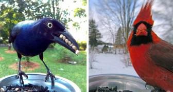 Elle place un appareil photo dans son jardin : lorsqu'elle télécharge ses fichiers, elle découvre des photos impressionnantes