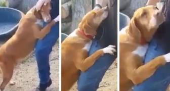 En journalist beger sig till ett hundstall för att skriva en artikel, men en hund ställer honom inför ett mycket svårt val