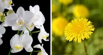In psicologia esistono due tipi di personalità: voi siete più orchidea o tarassaco?