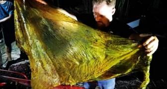 Des chercheurs trouvent une baleine morte avec 40 kg de plastique dans l'estomac, dont des sacs et des sachets de riz