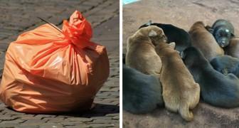 Getta 8 cuccioli in un sacco della spazzatura: la polizia lo intercetta e lo arresta