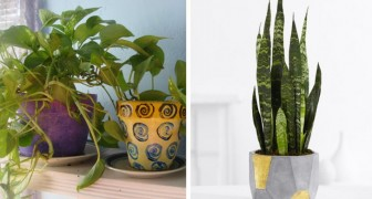 Mit einer dieser 6 Pflanzen in eurem Schlafzimmer werdet ihr besser schlafen können