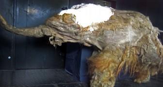 Les scientifiques ont réveillé les cellules d'un mammouth de 28 000 ans... avec des résultats inquiétants
