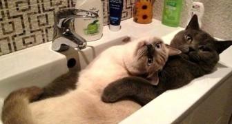 20 Katzen am Rande der Absurdität, die von ihren Besitzern als völlig verrückt bezeichnet wurden
