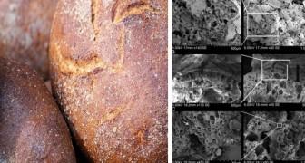 Les archéologues ont trouvé du pain qui remonte à 14 000 ans, bien avant la révolution agricole