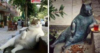 Een beroemde kat is overleden: de stad herdenkt hem met een standbeeld op zijn favoriete plek