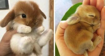 Deze schattige konijntjes zijn de beste manier om in de Paassfeer te komen