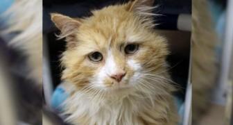 Eine Katze legt 20 Kilometer zurück, um bei ihren Menschen zu sein: Doch diese wollen sie loswerden
