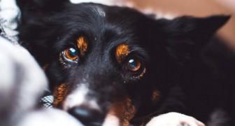 Votre chien comprend vos émotions simplement en sentant votre odeur : la science le confirme