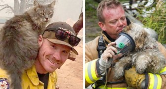 15 comoventes fotos de bombeiros que arriscaram a vida para salvar animais em perigo