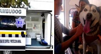 De eerste gratis ambulance arriveert om zwerfhonden te redden die zorg nodig hebben
