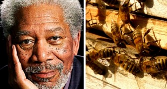 The actor Morgan Freeman turns his 50-acre ranch into a sanctuary for bees