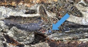 Fossielen onthullen een nieuw verontrustend detail over de catastrofe die de dinosaurussen heeft uitgeroeid
