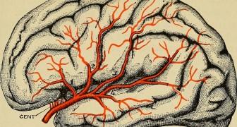 Il est de plus en plus évident que la maladie de Parkinson ne provient PAS du cerveau