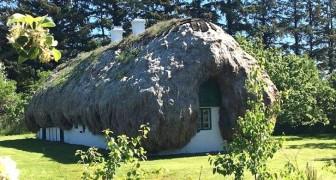 L'antica tradizione danese delle case con i tetti di alghe: le immagini sembrano uscite da una fiaba