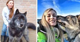 18 photos de chiens loups qui vous donneront envie d'en tenir un dans les bras