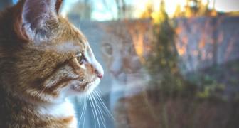 Att ha en katt hemma driver bort negativitet. De stöter bort onda andar och är välgörande för själen