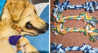 A woman's Golden Retriever dog died because it accidently swallowed parts of a common rope toy
